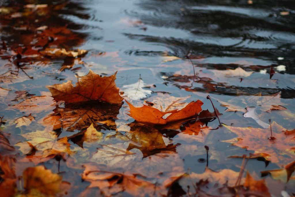raining image